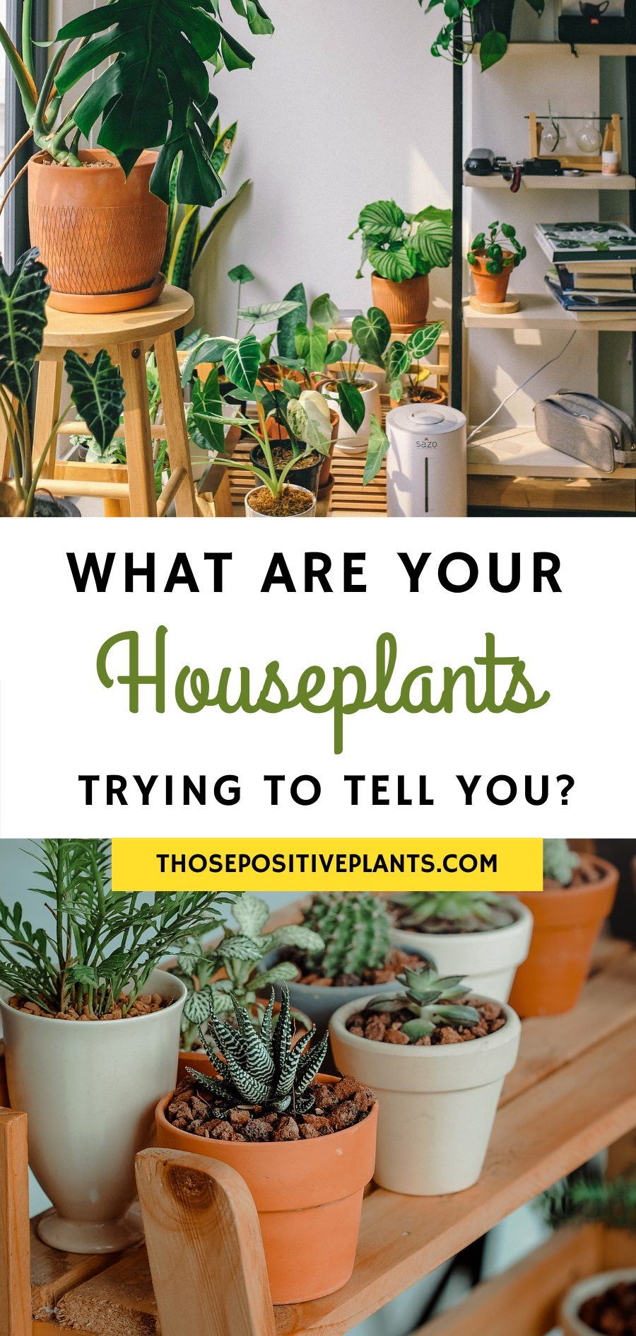 what are your houseplants trying to tell you