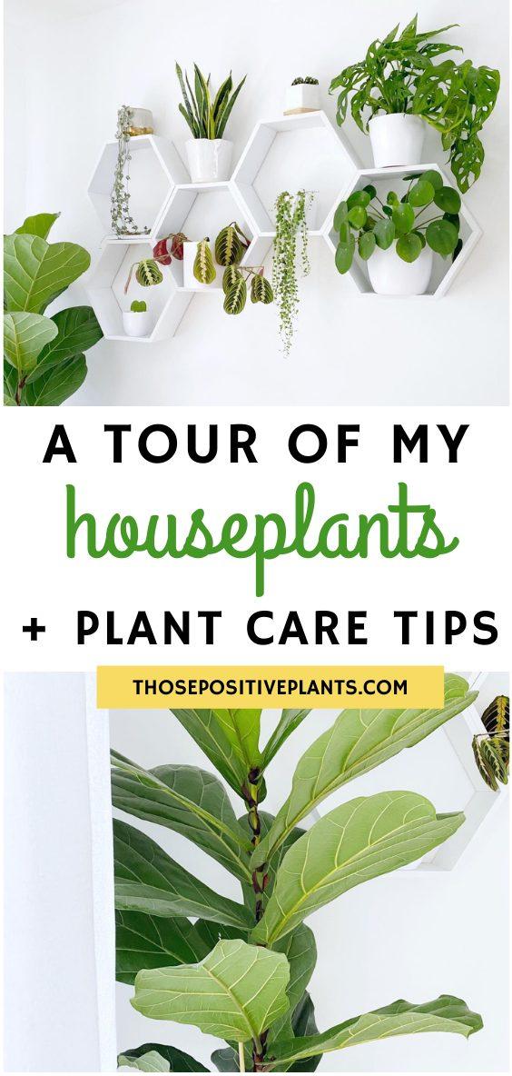 houseplant tour