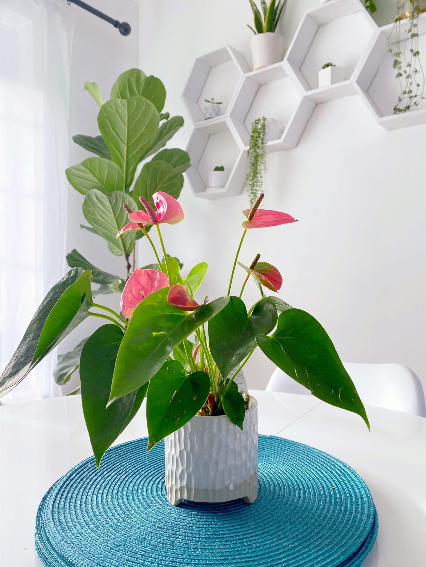 houseplants for valentine's day