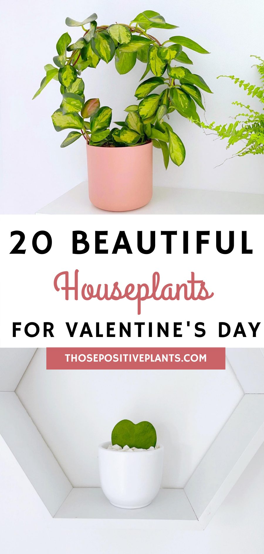 houseplants for valentines day