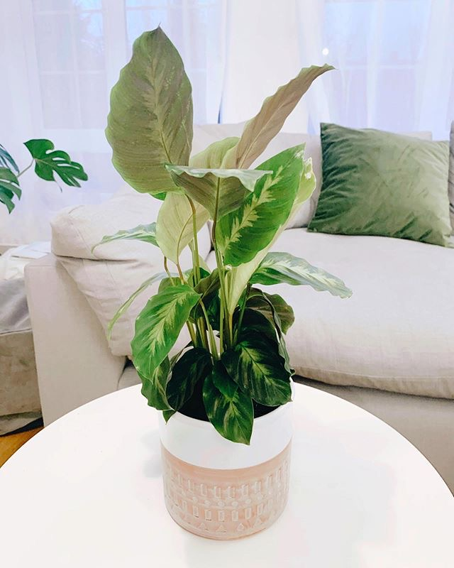 10 Best Air Purifying House Plants