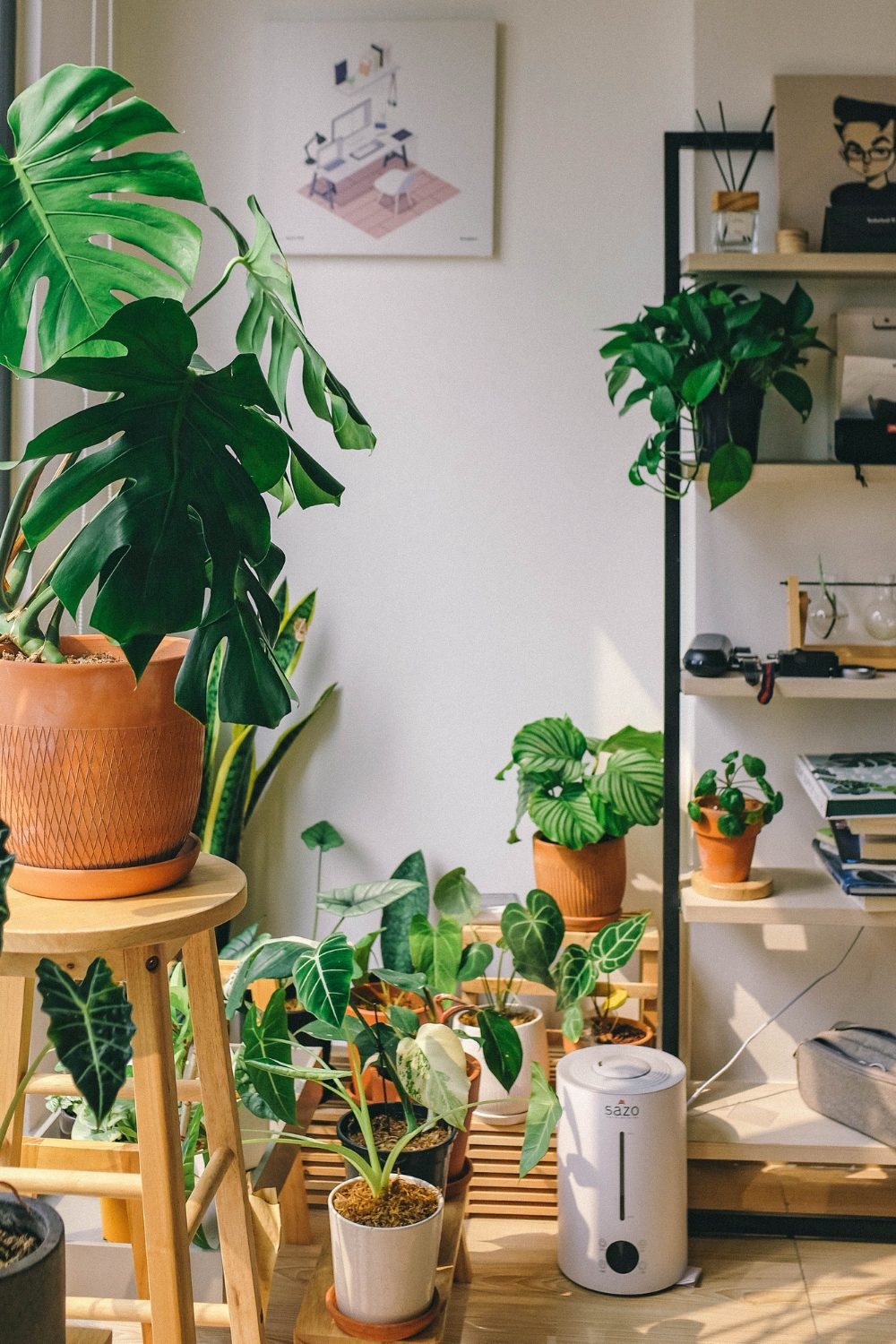 What are your houseplants telling you?