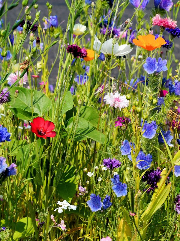 How to plant a wildlife border in your garden