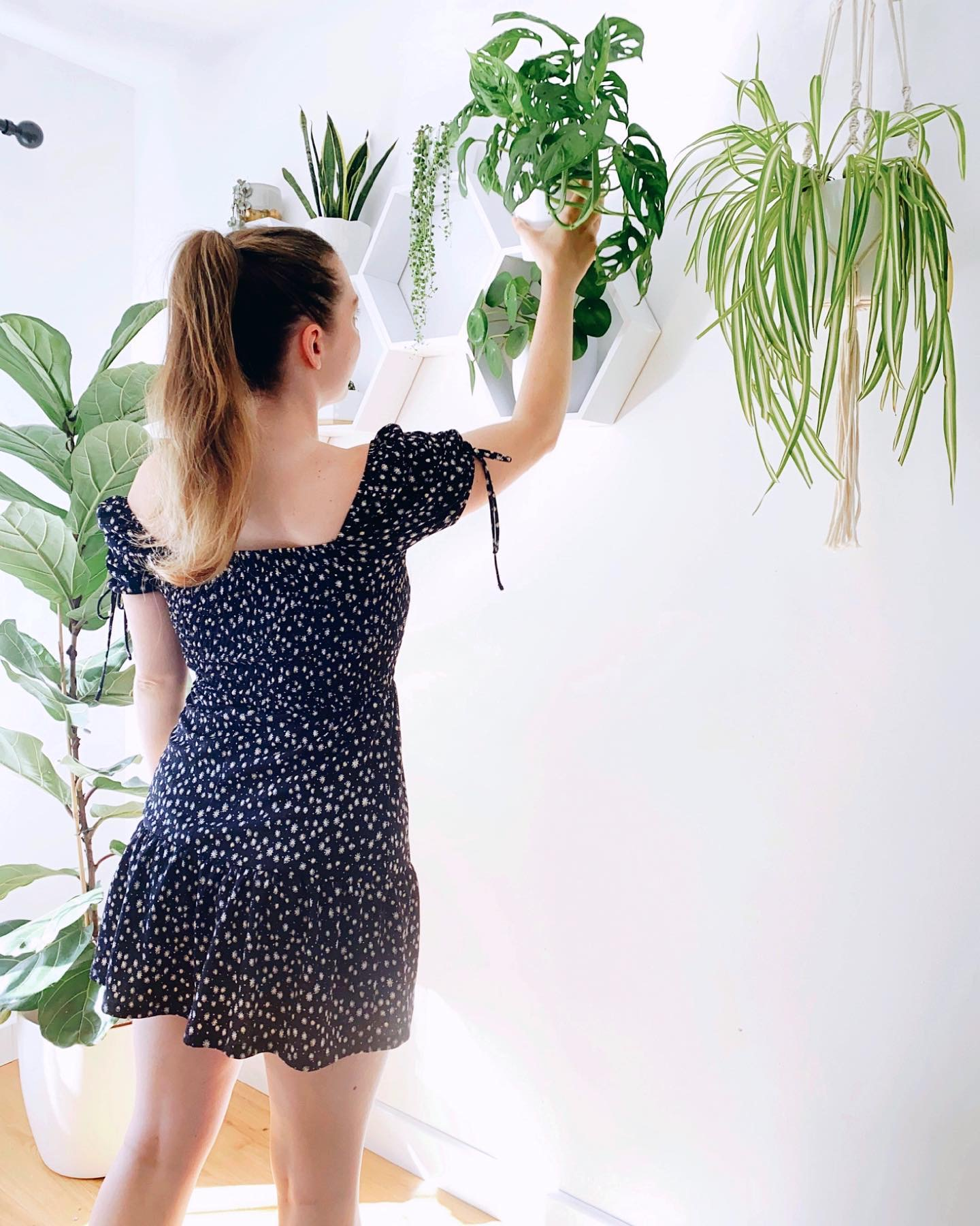 A Tour of my Houseplants + Plant Tips