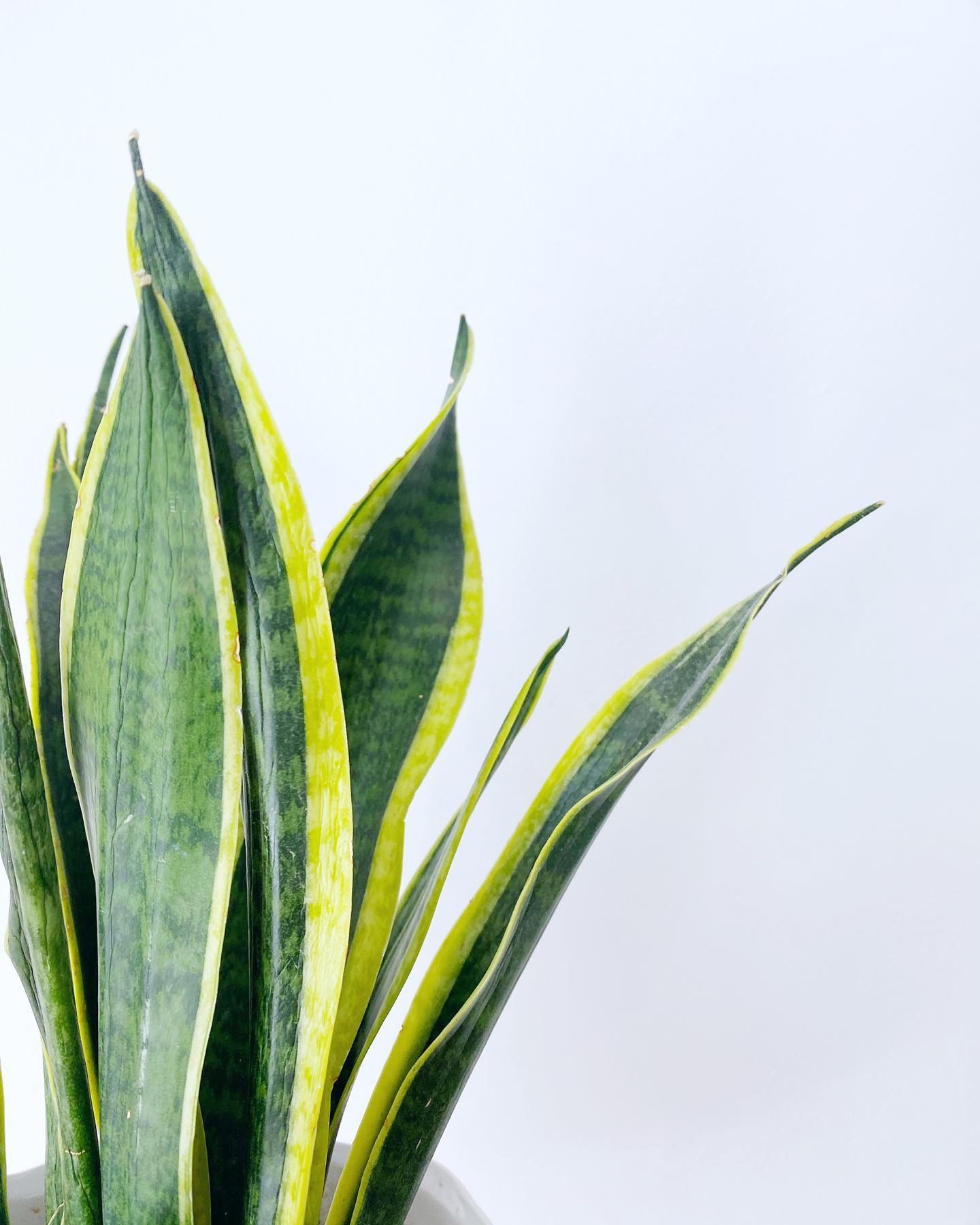 10 Shade Tolerant Plants You Will Love
