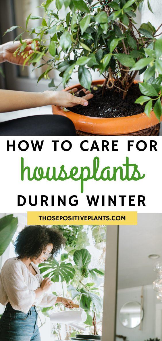 houseplants during winter