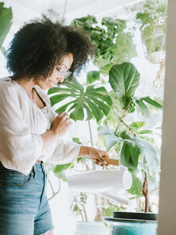 How to care for your houseplants during winter