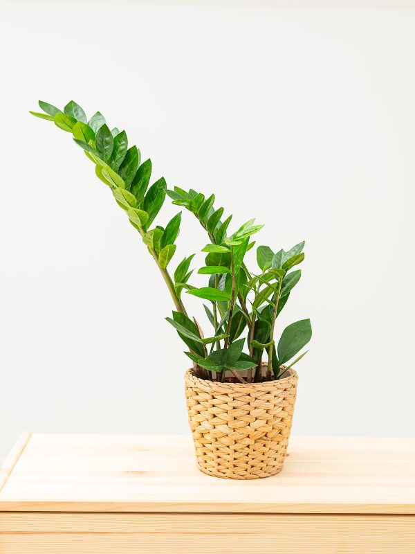 10 Easy Houseplants to Look After
