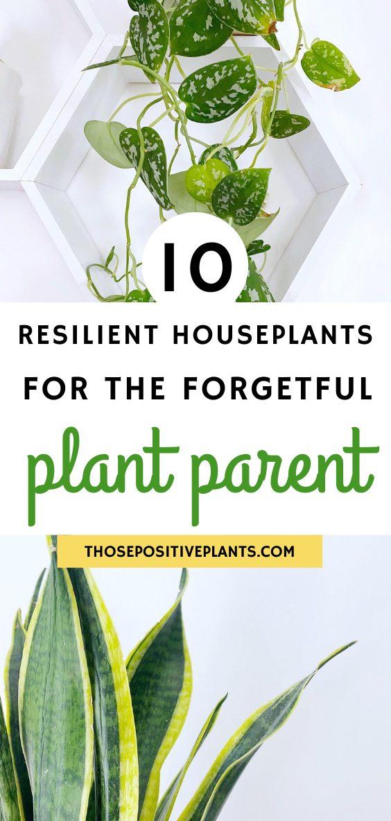 resilient indoor plants
